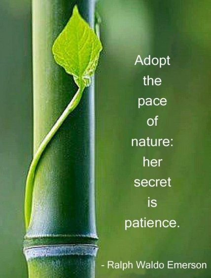 nature-patience-quote